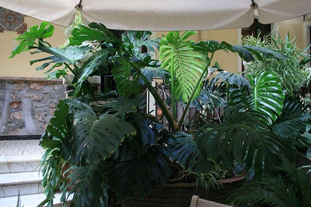 La zona relax immersa nel verde b b catania casa barbero - Giardino interno casa ...