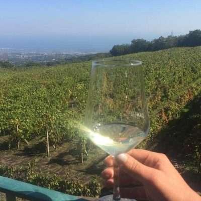 esperienza tour cantine vino etna